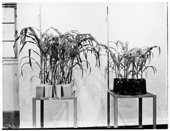 California Institute of Technology Plant Laboratory, 1952