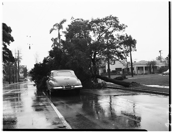 Tree down ...West 11th Street and South Gramercy Place, 1952