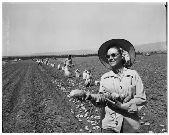 Potato situation, 1952.
