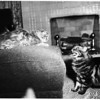 Want home for cat, 1952