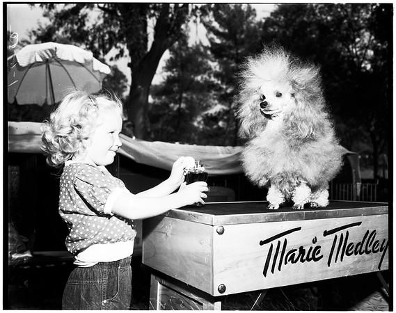 Pasadena dog show, 1952