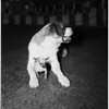 Dog show (Santa Monica, Miramar Hotel), 1952