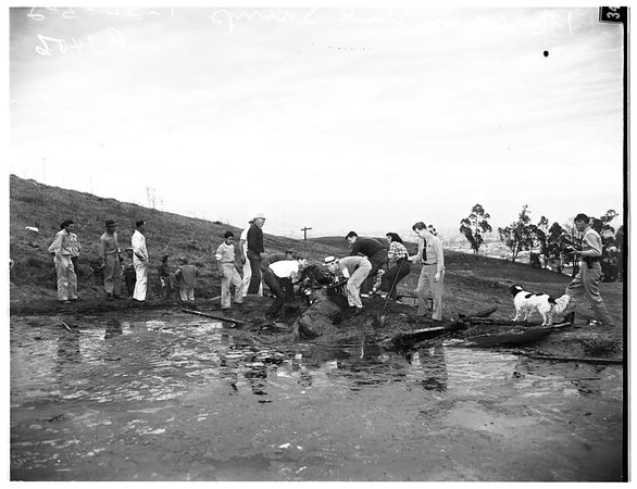 Horse falls in oil sump and is rescued, 1952