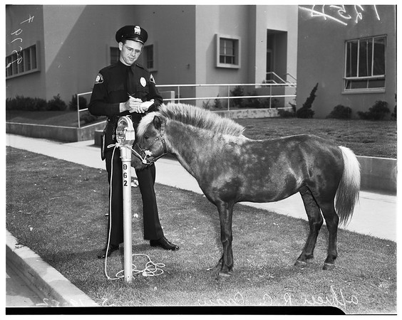 Roving pony tied to parking meter, 1952