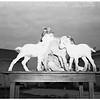 Quadruplet goats, 1952