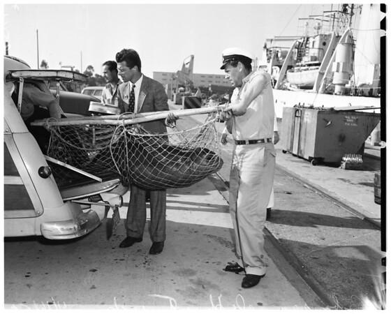 Sick sea elephant, 1952
