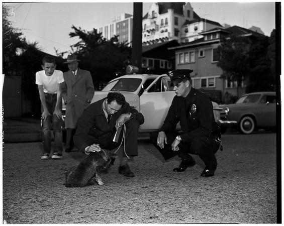 Hit and run dog injury, 1952