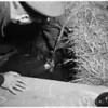 Woman falls in cesspool (dies), 1952