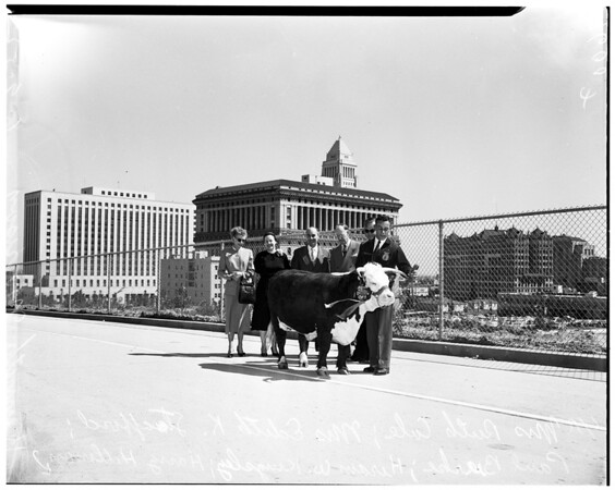 Four-H Champion and his cow, 1952