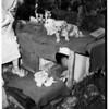 Chihuahua litter, 1952