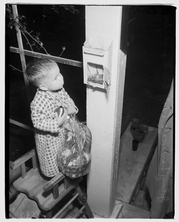 Birds in mailbox (Pasadena) Four baby linnets, 1952