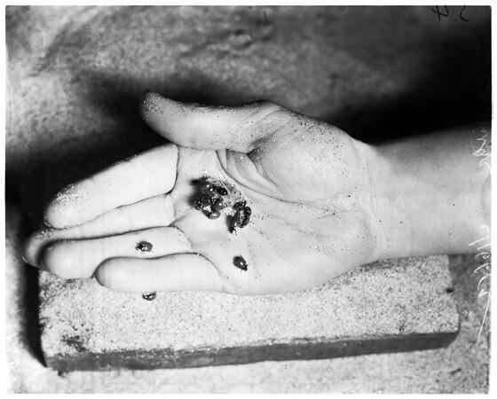 Ladybugs (Long Beach), 1952