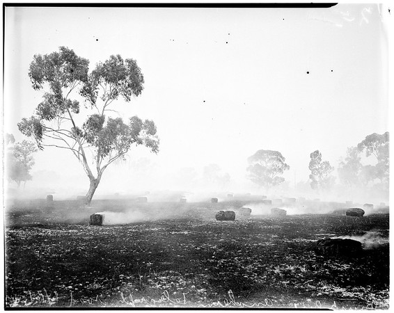 Bales of hay burning, 1952