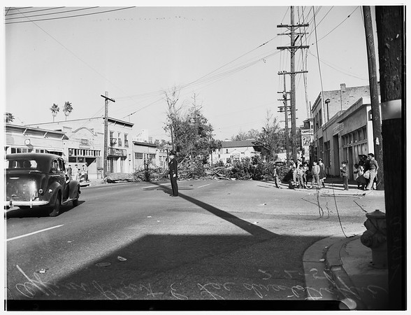 Eucalyptus tree down ---East 4th Street and Clarence Street, 1952