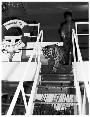 "Wild animals brought on ship ""Anchorage Victory"" from Jakarta, 1952"