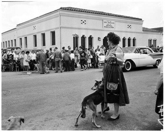 Dog vaccinations, 1958