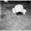 Puppy show (Burbank), 1952.