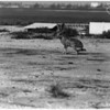 Jackrabbits at Long Beach Municipal Airport, 1958