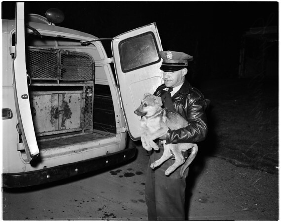 Couple attacked by their dogs, 1958
