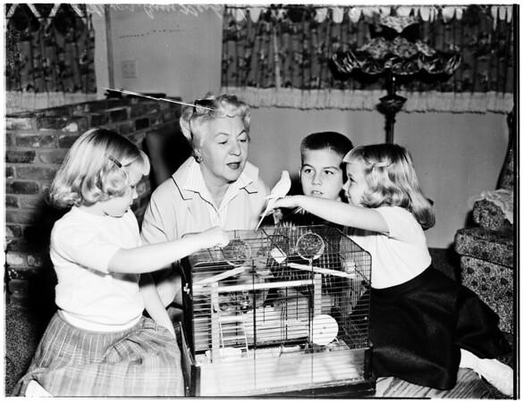 Lost parakeet, 1957