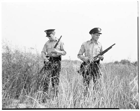 Bandit hunt in Rio Hondo bottom lands near Whittier, 1958