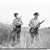 Bandit hunt in Rio Hondo bottom lands near Whittier, 1958