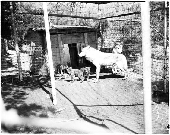 Griffith Park Zoo, 1958
