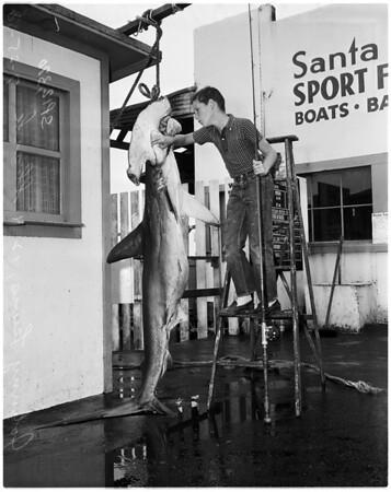 Fish -- Shark -- Hammerhead, 1958