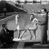 Knickerbocker's new facilities opening, 1956
