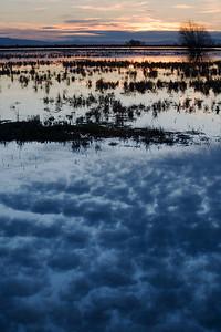 Reflecting Clouds at Merced NWR