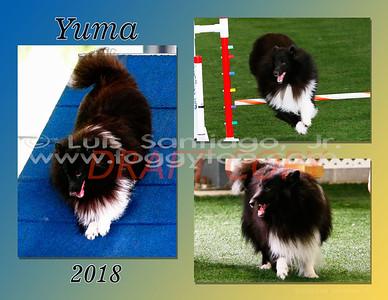 BobY_2016_Yuma v2 85x11x3 final