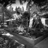 View of a courtyard of the Julius Shulman House and Studio, Los Angeles, 1949-1950