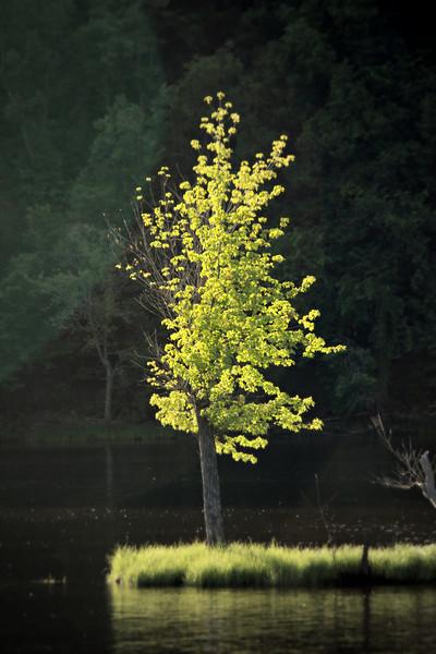 Tenacious Timber