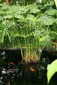 Tranquil Coy Pond
