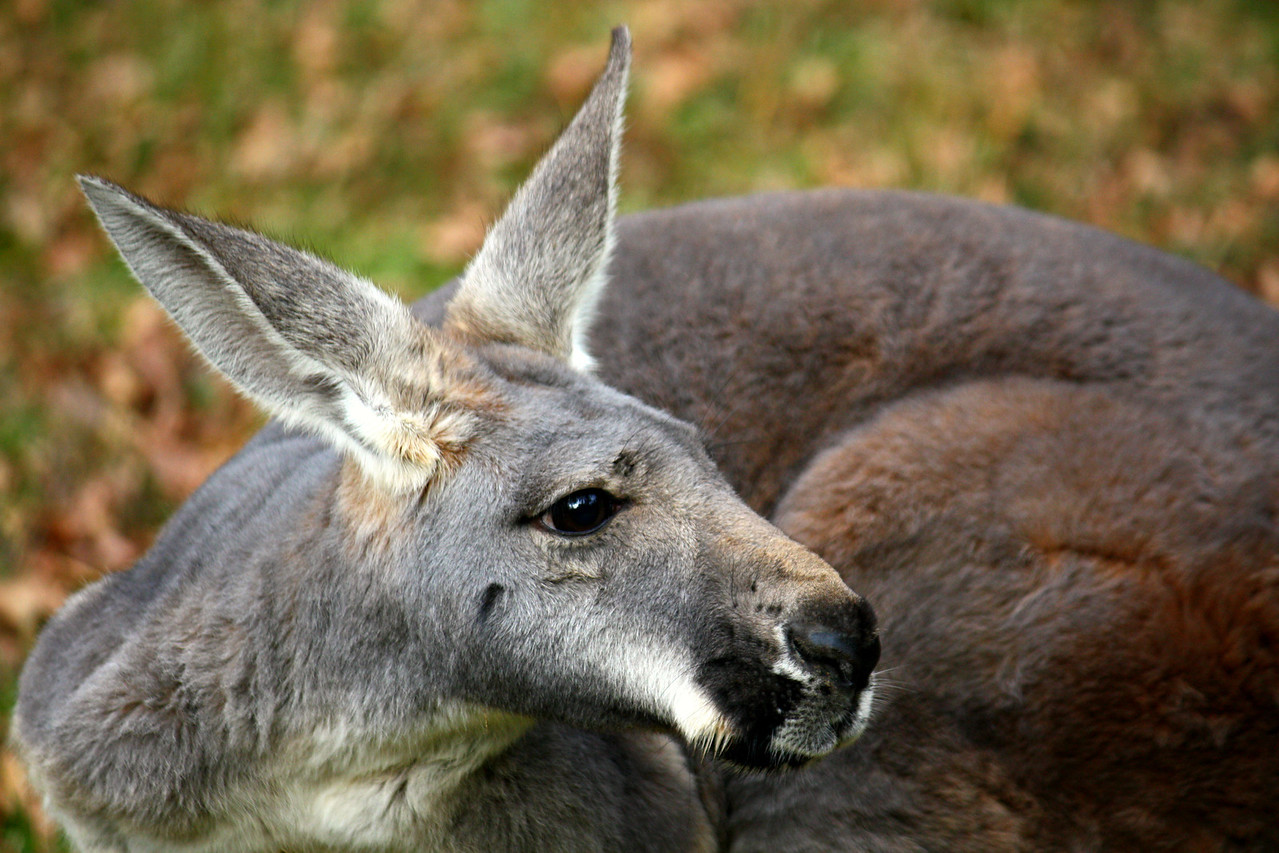 I Wallaby Loved By You
