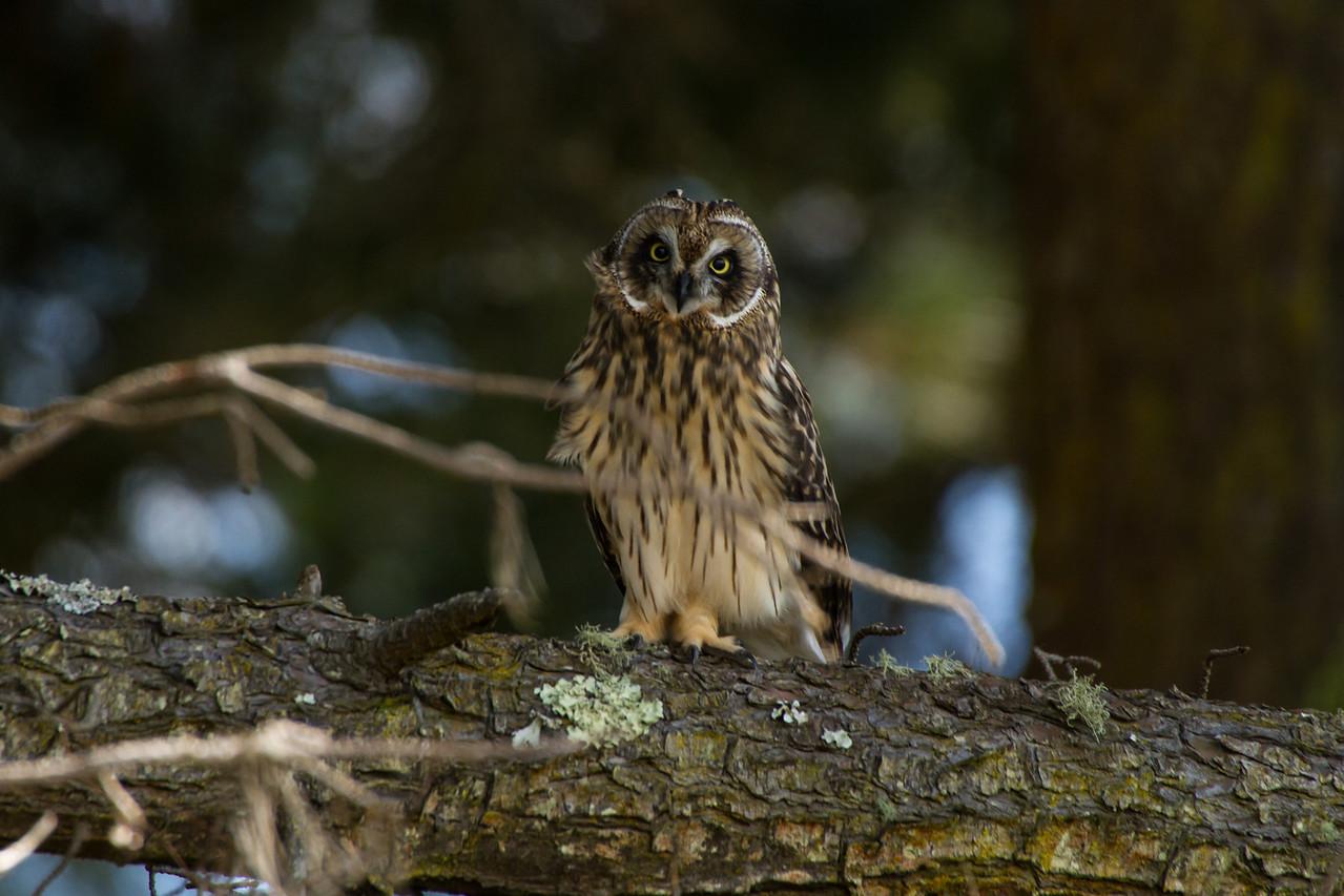 Woodsy owl.
