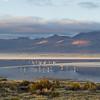 Surire salt flat, Northern Chile Altiplano