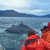 Quest for the Humpback Whales of the Magellan Straits, staying 2 nights at the Eco-camp of Carlos III Island.
