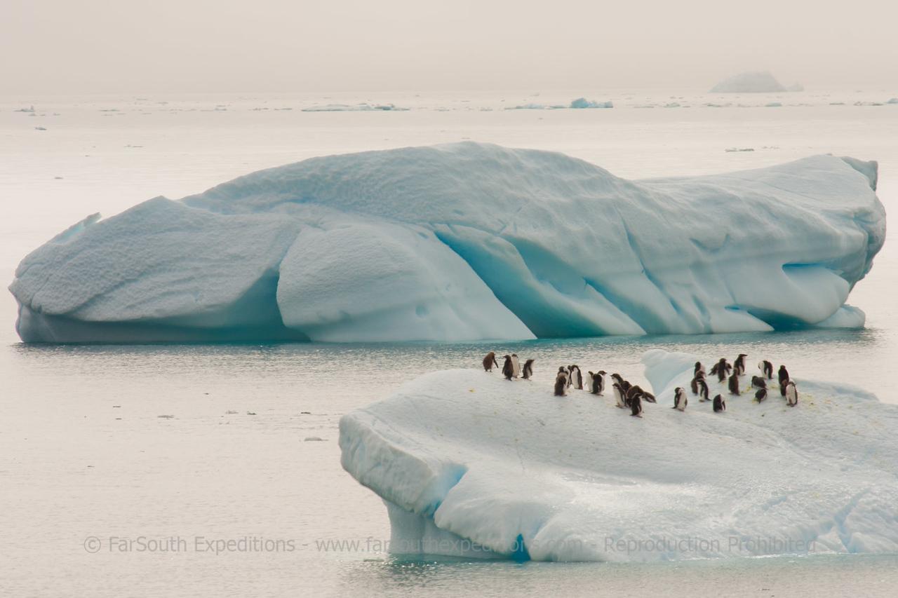 "© Claudio F. Vidal, FS Expeditions -  <a href=""http://www.fsexpeditions.com"">http://www.fsexpeditions.com</a>"