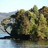 Sailing the Chilean Fjords and Guaitecas Archipelago
