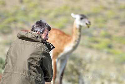 Photographing Guanaco at Torres del Paine National Park, Patagonia, Chile