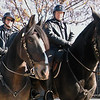 City of Philadelphia Mounted Police at the Linc: Left - Clydesdale Mix, Right - Percheron.  Wow these are big horses!