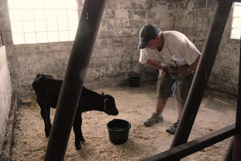 Davis feeds a sick calf