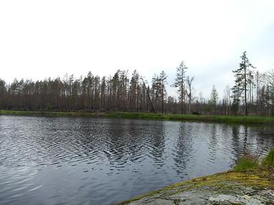 Hälleskogsbrännans naturresrvat