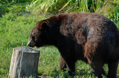 Vince Shute Bear Sanctuary