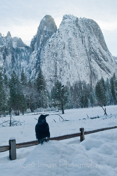 Yosemite_11_2010-232