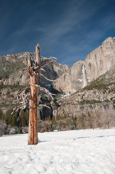 Yosemite_11_2010-187