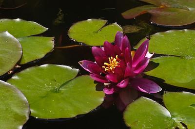 Doug's Pond