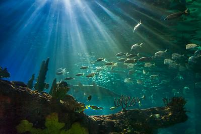 Toronto Aquarium - 2014
