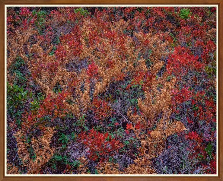 Blazing Ferns